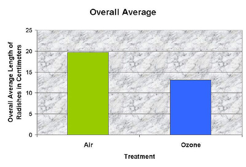 What effect does ozone have on the growth of radish plants?