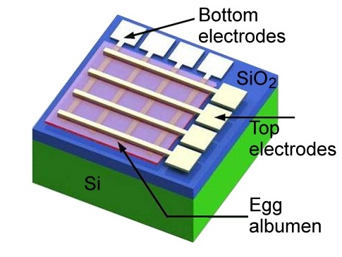 Egg Memristor recipe (serves one)