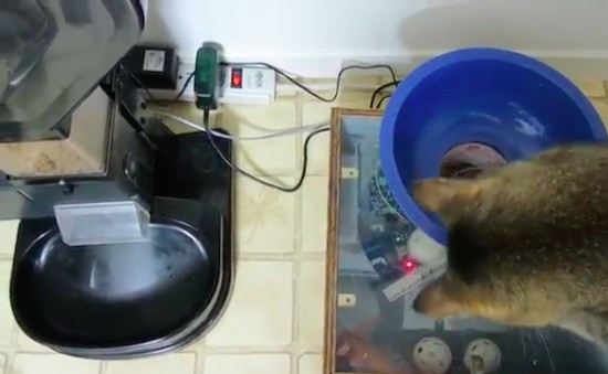 Maker builds feeding machine that lets his cat 'hunt' for food