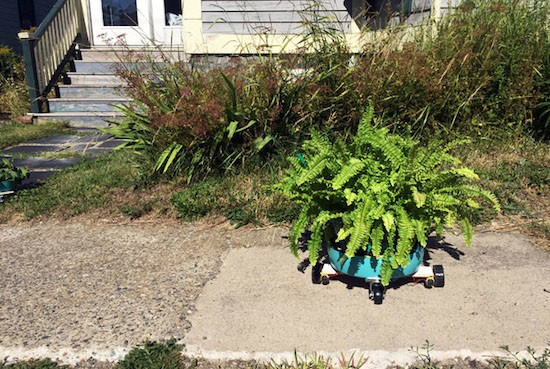 These Arduino bots move plants to sunny and shady spots