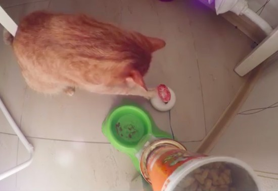 Make a cat feeder with Arduino, a servo and two cans