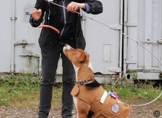 Robot lets your dog walk itself using Arduino and sausage